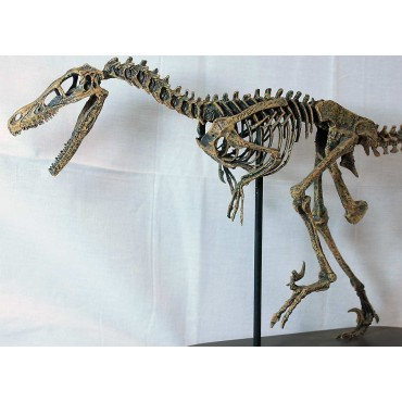 Velocirraptor-DINOSAURIOS