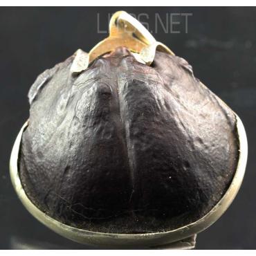 Colgante de braquiópodo