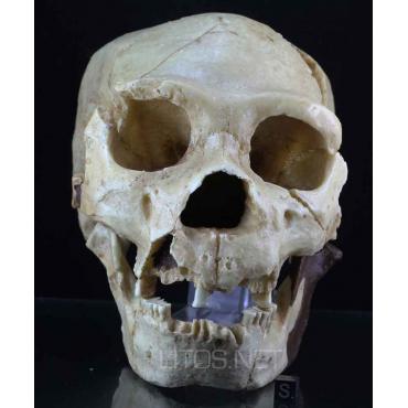 Atapuerca 5