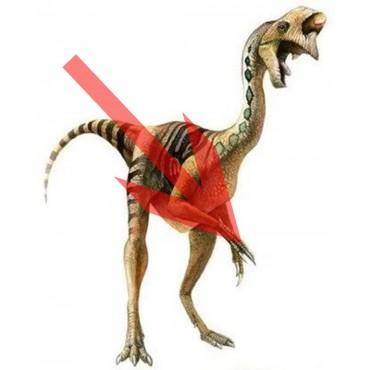 Garra Oviraptor