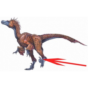 Garra de Deinonychus