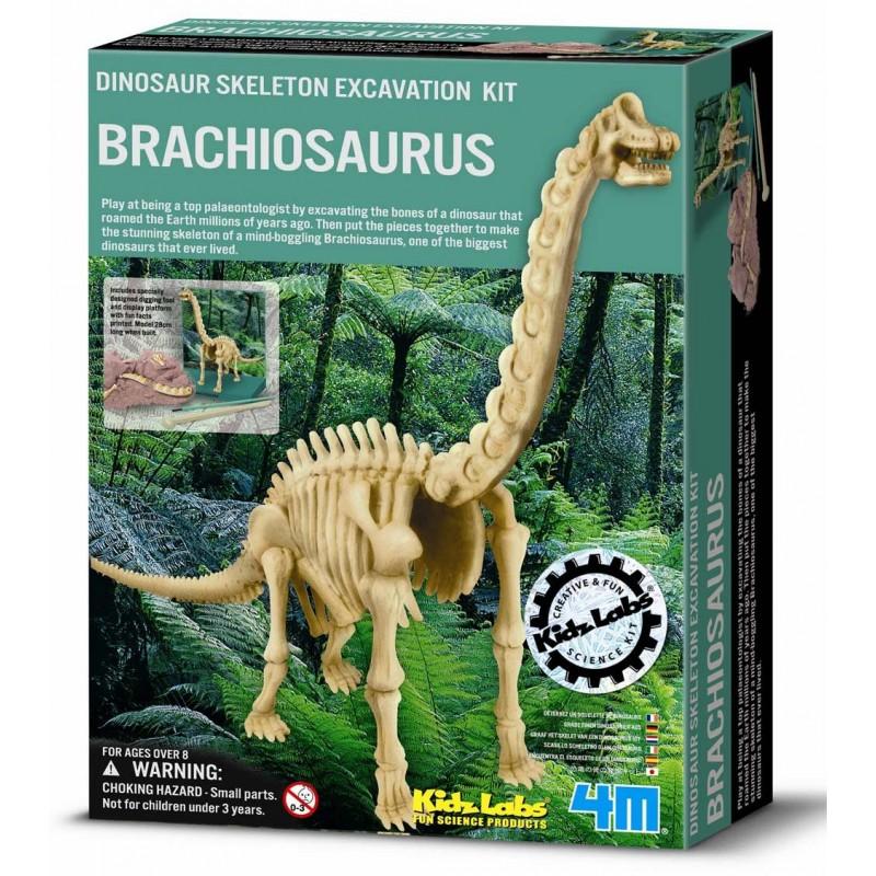 Excavación de dinosaurio braquiosaurus