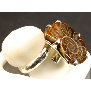 Colgante de Ammonite fosilizado