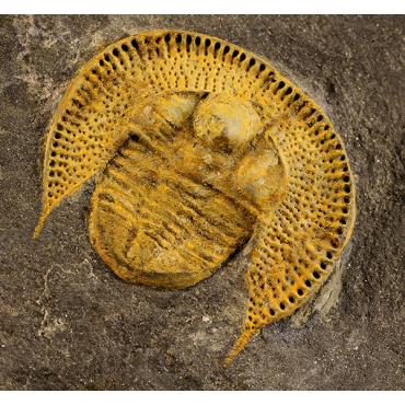 Nankinolithus