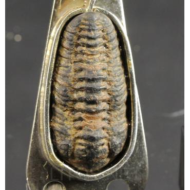 Colgante trilobite