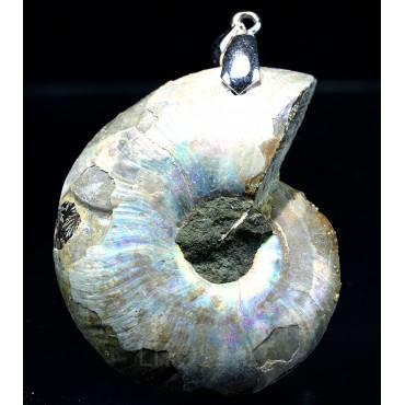 Colgante de Ammonite fosilizado J2738
