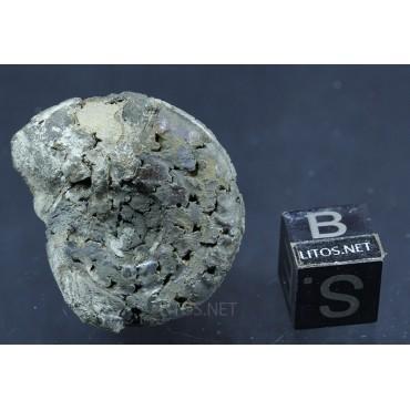 Fósil Ammonite F2780