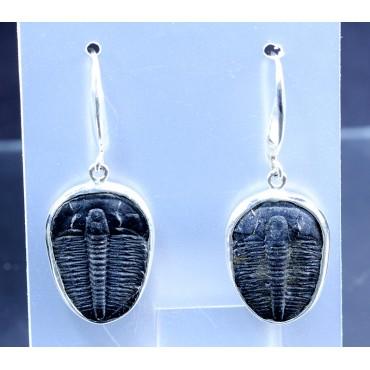 Pendientes de trilobite
