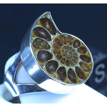 Anillo de Ammonite fosilizado