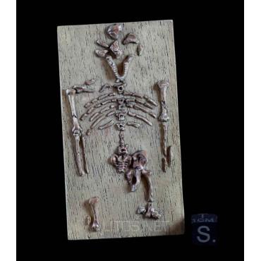 LUCY (esqueleto)