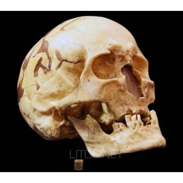 Homo sapiens fossilis, Abri...
