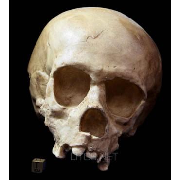 Homo  neanderthalensis, niño de la Quina
