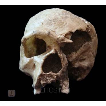 Homo sapiens steinheinmensis