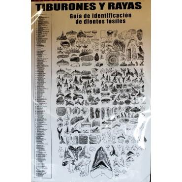 POSTER TIBURONES Y RAYAS