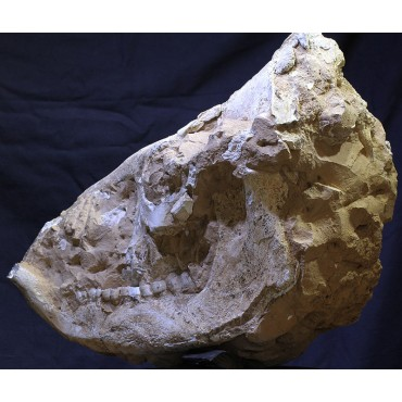 Mineral chilotherium