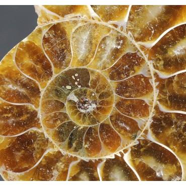 Colgante de Ammonite...