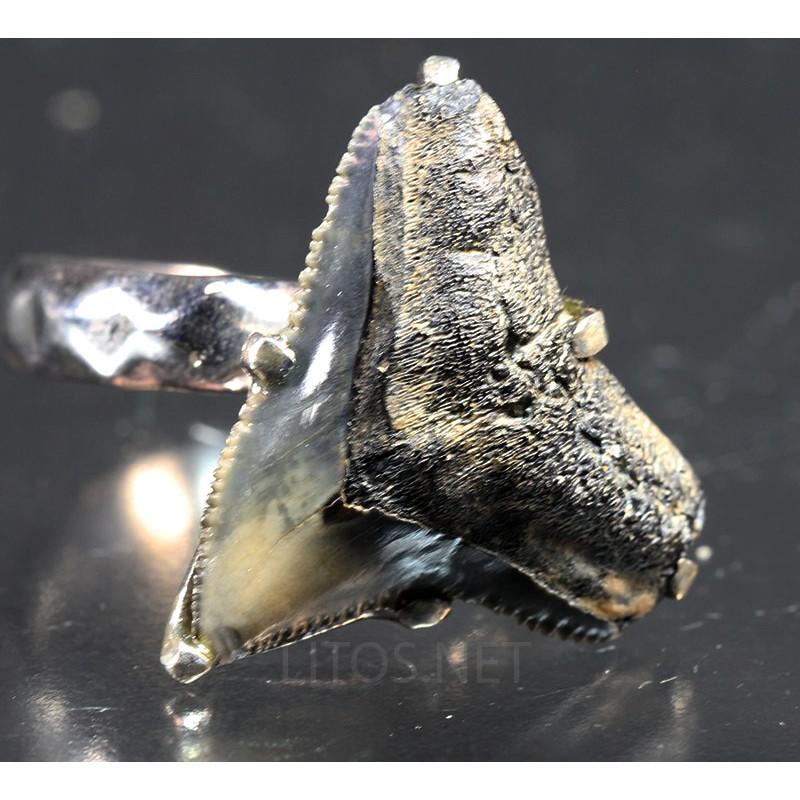 Anillo de diente de tiburón