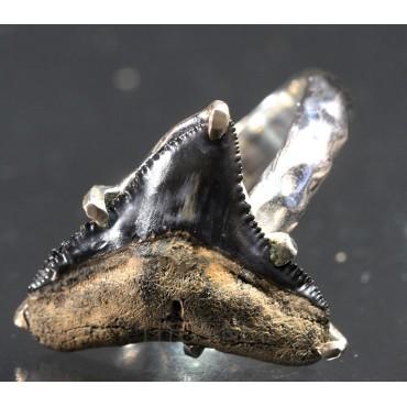 Anillo diente de tiburón